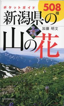 新潟県の山の花