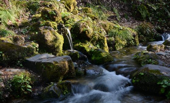 杜々の森湧水-春